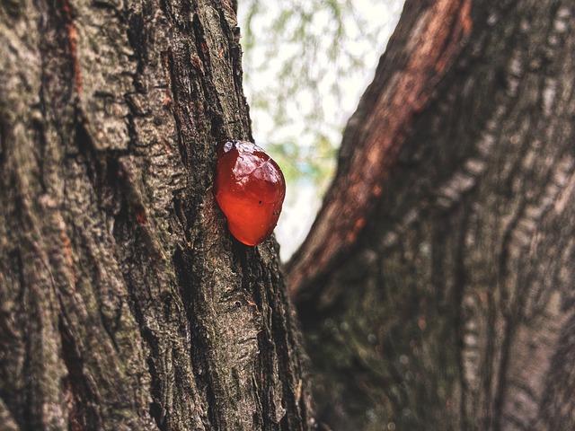 smůla na stromě