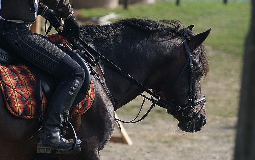 vybavení pro jízdu na koni – ohlávka i otěže….